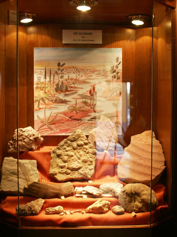 au musée geologique de Sentheim - le bassin rhénan